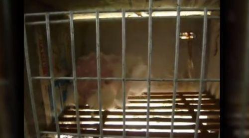 conejos single men Find more divorce court information in conejos county, colorado.
